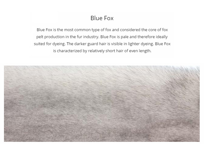 SAGA blue fox fur