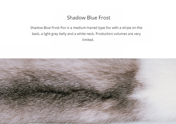 SAGA shadow blue frost fox fur